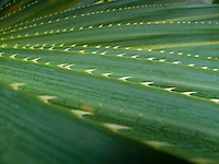 Aloe vera plant with sharp teeth