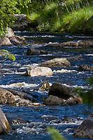 Naturnaher Bach mit Steinen, Norwegen, Skandinavien