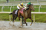 NEW ORLEANS, LA - JANUARY 21:<br />   Guest Suite#8 ridden by Robby Albarado leads and finishes to win during the LeComte Stakes at the Fairgrounds Race Course on January 21,2017  in New Orleans, Louisiana. (Photo by Steve Dalmado/Eclipse Sportswire/Getty Images)