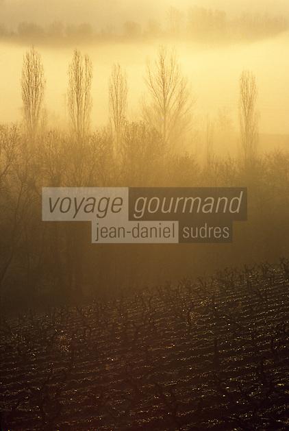 Europe/France/Pays de la Loire/Maine-et-Loire/Environ d'Angers : AOC Anjou Savennières (Coulée de Serrant) - Brume sur le Val de Loire