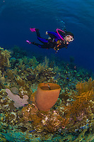8 June 2015:: SCUBA diver Sally Herschorn explores the scenery at Ocean Point Reef, on the North Shore of Grand Cayman Island. Located in the British West Indies in the Caribbean, the Cayman Islands are renowned for excellent scuba diving, snorkeling, beaches and banking.  Mandatory Credit: Ed Wolfstein Photo *** RAW (NEF) Image File Available ***