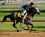29 April 10: Paddy O'Prado  works out at Churchill Downs in Louisville, Kentucky