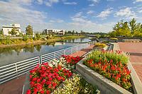 Summer flowers in Golden Heart Park in downtown Fairbanks, Alaska
