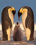 IUCN Endangered & Threatened Species