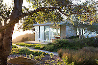 Modern glass home on hill with California native plant garden, Santa Barbara with California native Live Oak trees (Quercus agrifolia). Courtyard with native shrubs, Manzanita and Coffeeberry and grass-like Rush (Juncus sp.)