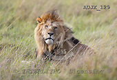 Dr. Xiong, ANIMALS, wildlife, photos, AUJX129,#a#