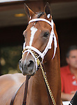 September 21, 2013.  Pennsylvania Derby contender Battier, trained by Todd Pletcher. Will Take Charge, trained by D. Wayne Lukas and ridden by Luis Saez, wins the Pennsylvania Derby at  Parx Racing, Bensalem, PA.  ©Joan Fairman Kanes/Eclipse Sportswire