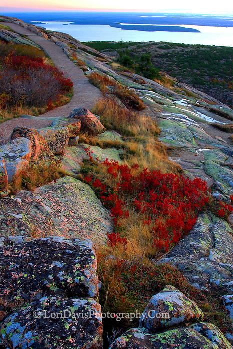 Autumn Pathway atop Cadillac Mt.  #A6