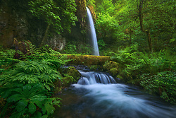 Waterfall and cascades through lush greens in a remote and wild area of the Columbia Gorge.