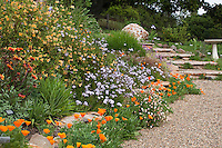 Colorful deer proof, drought tolerant flower garden on hill including California native plants with gravel path, Torgovitsky