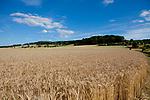 Europa, DEU, Deutschland, Hessen, Schlitzer Land, Agrarlandschaft, Sommer, Himmel, Wolken, Kategorien und Themen, Landwirtschaft, Landwirtschaftlich, Agrar, Agrarwirtschaft, Wetter, Wetterelemente, Wetterlage, Wetterkunde, Witterung, Witterungsbedingungen, Wettererscheinungen, Meteorologie, Wettervorhersage<br /> <br /> [Fuer die Nutzung gelten die jeweils gueltigen Allgemeinen Liefer-und Geschaeftsbedingungen. Nutzung nur gegen Verwendungsmeldung und Nachweis. Download der AGB unter http://www.image-box.com oder werden auf Anfrage zugesendet. Freigabe ist vorher erforderlich. Jede Nutzung des Fotos ist honorarpflichtig gemaess derzeit gueltiger MFM Liste - Kontakt, Uwe Schmid-Fotografie, Duisburg, Tel. (+49).2065.677997, ..archiv@image-box.com, www.image-box.com]