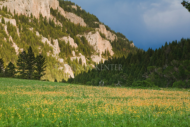 A field of wildflowers and a rocky hillside in the Smith River corridor