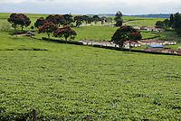 KENYA Kericho, worker pick tea leaves for Lipton tea, tea plantation of Unilever, settlement for worker / KENIA Kericho, Frauen pfluecken Teeblaetter fuer Lipton Tee auf einer Plantage von Unilever, Haus Siedlung fuer die Plantagenarbeiter