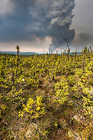 Plume of smoke rises from the Eagle trail forest fire in interior Alaska, near the town of Tok.