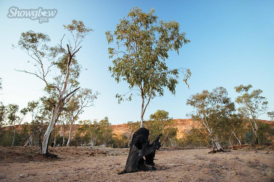 Image Ref: CA629<br /> Location: Alice Springs<br /> Date of Shot: 09.09.18