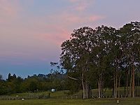 Eucalyptus trees, old fences and a water tank in a pasture, with pink sunset clouds in the distance, Kula, Maui.