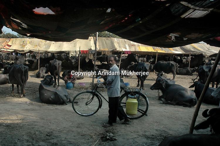 A milkman passes by a buffalo tent at Sonepur fair ground. Bihar, India, Arindam Mukherjee