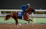 October 27, 2019 : Breeders' Cup Juvenile  entrant Scabbard, trained by Eddie Kenneally, exercises in preparation for the Breeders' Cup World Championships at Santa Anita Park in Arcadia, California on October 27, 2019. Scott Serio/Eclipse Sportswire/Breeders' Cup/CSM