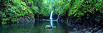 Wainabau Falls, Taveuni, Fiji Islands<br /> <br /> Image taken on large format panoramic 6cm x 17cm transparency. Available for licencing and printing. email us at contact@widescenes.com for pricing.