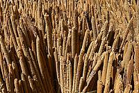 NIGER, village Namaro, market, millet / Markttag, Verkauf von Hirse