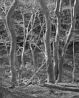 """""""Side Lighted Trees""""<br /> Great Smoky Mountains National Park, Tennessee<br /> <br /> This photograph shows trees soaking up warm afternoon sun and good creek water in the Great Smoky Mountains National Park."""