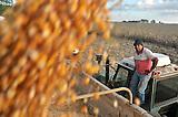 Cosecha de maiz en Ines Indart, Buenos Aires, Argentina