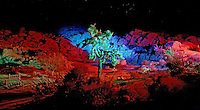 Shadow Ranch Joshua Tree