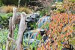 Man Made Stream with double waterfall in Back Yard.  Private garden professionally landscaped. Fall color, driftwood, ferns and grasses.