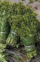 Asie/Malaisie/Bornéo/Sarawak/Kuching: Fougères comestibles sur le marché