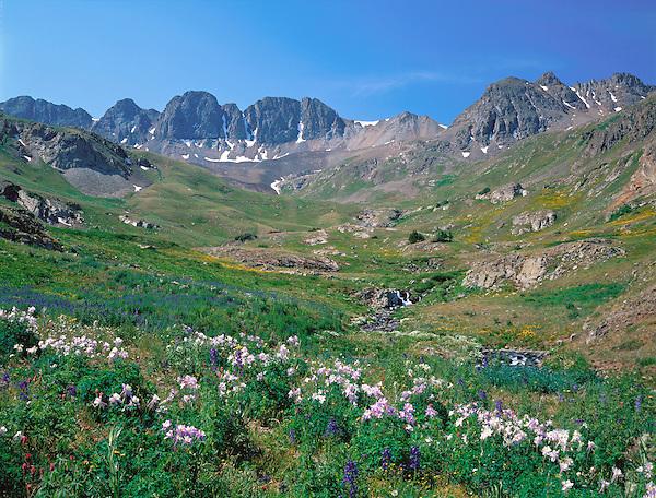 Wildflowers in American Basin, San Juan Mounatins, Colorado, .  John leads wildflower photo tours into American Basin and throughout Colorado. All-year long.