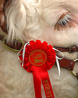 Three Counties Show general pictures...Copyright John Eveson,Dinkling Green Farm, Whitewell, Clitheroe, Lancashire. BB7 3BN. ..01995 61280..j.r.eveson@btinternet.com..www.cfimages.co.uk
