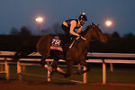 Thoughtfully, trained by trainer Steven M. Asmussen, exercises in preparation for the Breeders' Cup Juvenile Fillies at Keeneland Racetrack in Lexington, Kentucky on November 1, 2020. /CSM