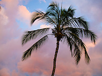 A single palm tree at sunset.