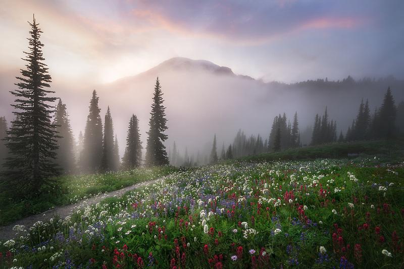 Mount Rainier with fog and wildflowers. Mount Rainier National Park, WA