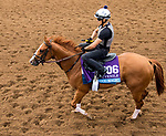 DEL MAR, CA - NOVEMBER 01: Good Magic, owned by eFive Racing Thoroughbreds & Stonestreet Stables, LLC and trained by Chad C. Brown, exercises in preparation for Sentient Jet Breeders' Cup Juvenile at Del Mar Thoroughbred Club on November 1, 2017 in Del Mar, California. (Photo by Sue Kawczynski/Eclipse Sportswire/Breeders Cup)