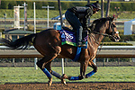 ARCADIA, CA  OCTOBER 30: Breeders' Cup Mile entrant El Tormenta, trained by Gail Cox, exercises in preparation for the Breeders' Cup World Championships at Santa Anita Park in Arcadia, California on October 30, 2019. (Photo by Casey Phillips/Eclipse Sportswire/CSM)