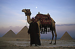 A man with a camel standing in front of the Pyramids of Giza which consist of the Great Pyramid of Giza also known as The Pyramid of Khufu, the somewhat smaller Pyramid of Khafre and the relatively modest sized Pyramid of Menkaure. Egyptologists believe that the Great Pyramid was built as a tomb for the Pharaoh Khufu around 2560 BC.It is the oldest of the seven wonders of the ancient world. At 481 feet high it remained the tallest man made structure in the world for over 3,800 years.