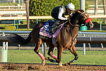 ARCADIA, CA  OCTOBER 25:Breeders' Cup Juvenile Fillies entrant Comical, trained by Doug F. O'Neill, exercises in preparation for the Breeders' Cup World Championships at Santa Anita Park in Arcadia, California on October 25, 2019. (Photo by Casey Phillips/Eclipse Sportswire/CSM)
