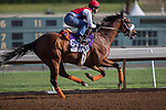 OCT 27 2014:Bronzo, trained by J.A. Inda De La Cerda, exercises in preparation for the Breeders' Cup Dirt mile at Santa Anita Race Course in Arcadia, California on October 27, 2014. Kazushi Ishida/ESW/CSM