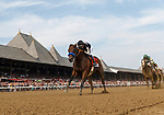 Marley's Freedom (no. 7) wins the Ketel One Ballerina  Stakes (Grade 1), Aug. 25, 2018 at the Saratoga Race Course, Saratoga Springs, NY.  Ridden by  Mike Smith, and trained by Bob Baffert, Marley's Freedom finished 3 3/4  lengths in front of Still There (No. 3).  (Bruce Dudek/Eclipse Sportswire)