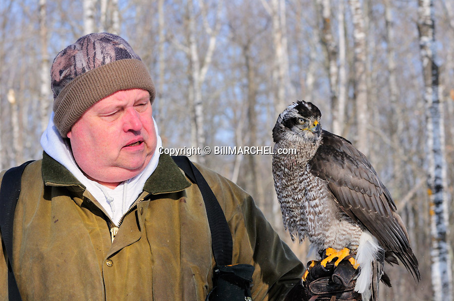 00432-030.09 Falconry: Falconer is hunting with goshawk on his fist.  Hawking.