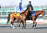 Aurelia's Belle and jockey Channing Hill win the Pure Romance Bourbonette Oaks, 03-22-14, for trainer  Wayne Catalano and owner James F. Miller.
