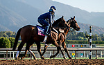 October 27, 2019 : Breeders' Cup Juvenile Fillies Turf entrant Abscond, trained by Eddie Kenneally, exercises in preparation for the Breeders' Cup World Championships at Santa Anita Park in Arcadia, California on October 27, 2019. Scott Serio/Eclipse Sportswire/Breeders' Cup/CSM