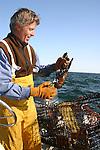 Man holding lobster on boat. Boston Harbor, MA, U.S.