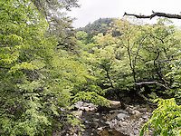 Bach beim buddhistischen Tempel Heinsa nahe Daegu, Provinz Gyeongsangnam-do, Südkorea, Asien<br /> creek at temple heinsa near Daegu,  province Gyeongsangbuk-do, South Korea, Asia