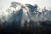 Xingu Indigenous Park, Mato Grosso, Brazil. Aldeia Matipu; on the way to the port on the Kuluene River; beams of sunlight filter through the trees at dawn.