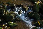 DEU, Deutschland, Bayern, Niederbayern, Nationalpark Bayerischer Wald, Herbstlandschaft, Bach Kleine Ohe | DEU, Germany, Bavaria, Lower-Bavaria, National Park Bavarian Forest, autumn landscape, brook Kleine Ohe