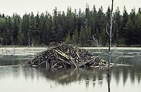 Biber, Burg eines Bibers, Biberburg, Biber-Burg, Castor fiber, European beaver, Castor d´Europe