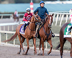 HALLANDALE BEACH, FL - JAN 27:Gun Runner #10 with Florent Geroux in the irons for trainer Steven M. Asmussen preparing to run and win the $16,000,000 Pegasus World Cup Invitational Stakes (G1) at Gulfstream Park on January 27, 2018 in Hallandale Beach, Florida. (Photo by Bob Aaron/Eclipse Sportswire/Getty Images)