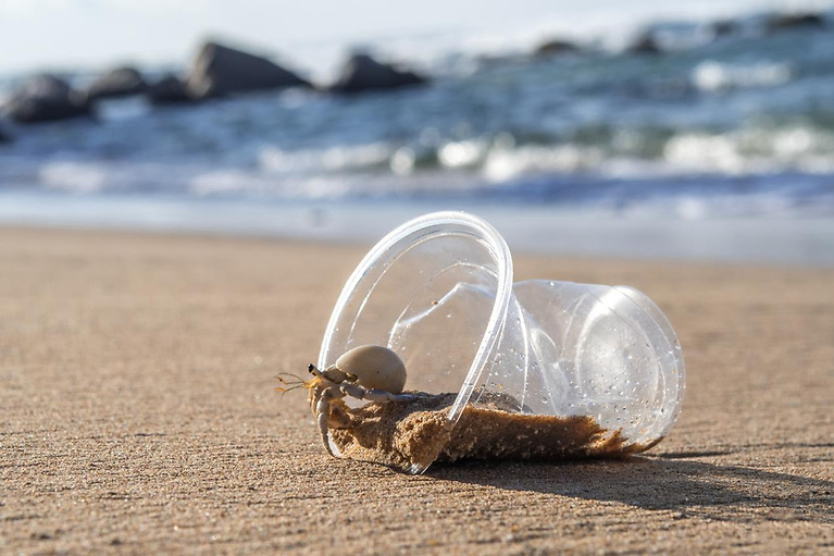 The research found that microplastics are affecting the behaviour of hermit crabs